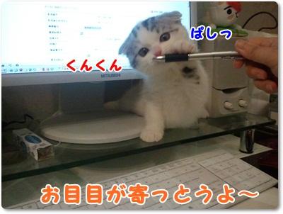 3_20110801021634.jpg