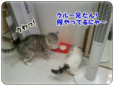 3_20110808210548.jpg