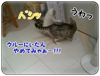 3_20110810011318.jpg