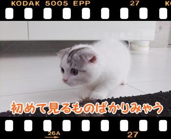 3_20110813132900.jpg