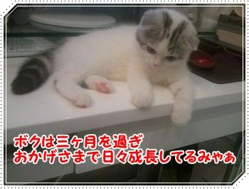 3_20110820123451.jpg