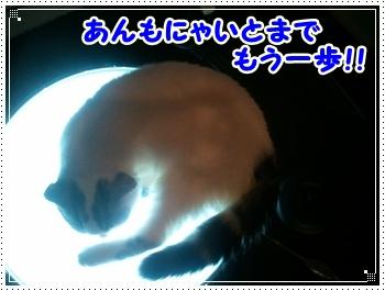 3_20111116211313.jpg