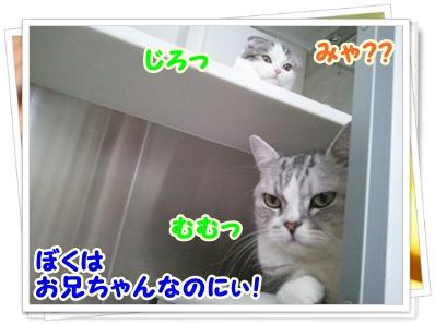 3_20111212012546.jpg