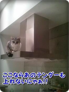 3_20111212224559.jpg