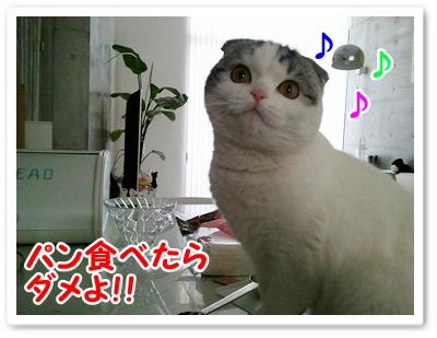 3_20120119013508.jpg