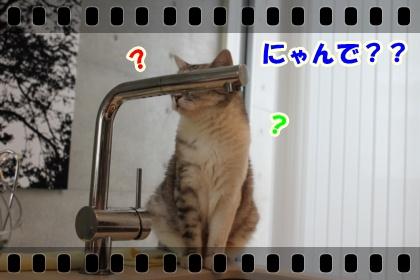 3_20120317025707.jpg