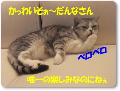 4-004_20110426231028.jpg