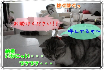 4-004_20120203013426.jpg