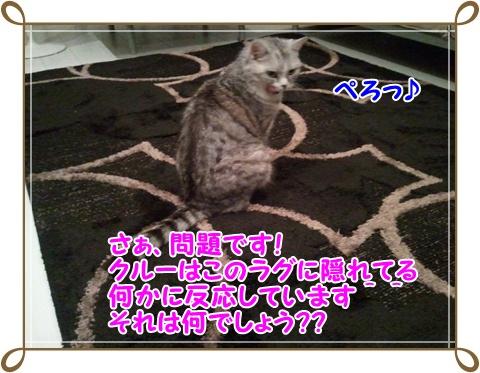 4_20110717232249.jpg
