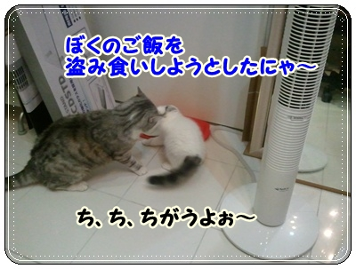 4_20110808210548.jpg