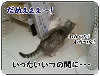 4_20110810011318.jpg