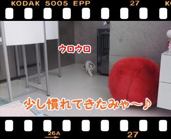 4_20110813132900.jpg