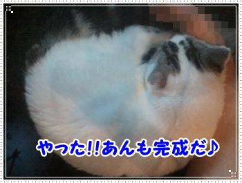 4_20111116211313.jpg