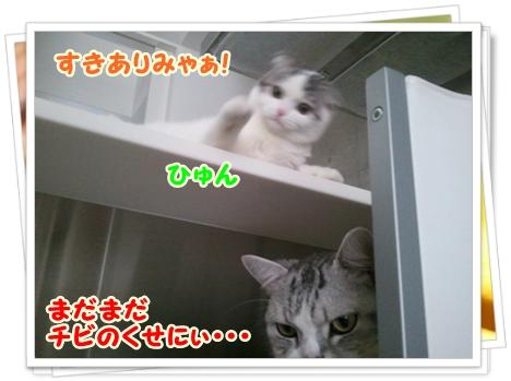 4_20111212012545.jpg