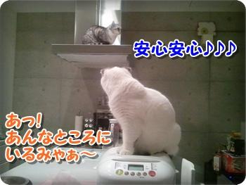 4_20111212224559.jpg