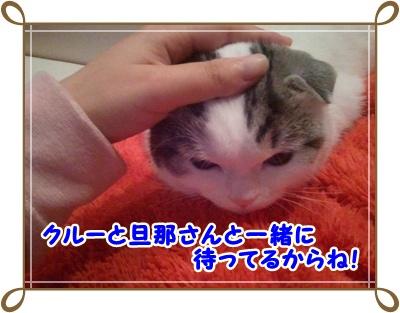 4_20111214015512.jpg