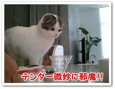 4_20120119013508.jpg