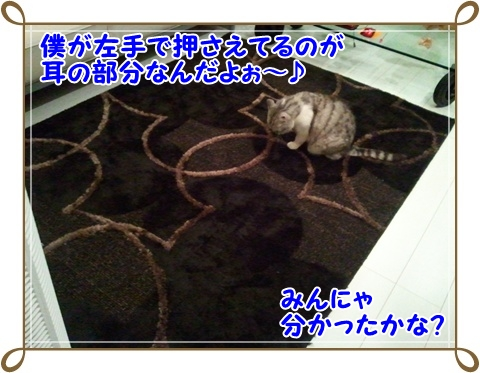 5_20110717232248.jpg