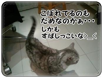 5_20110810011318.jpg