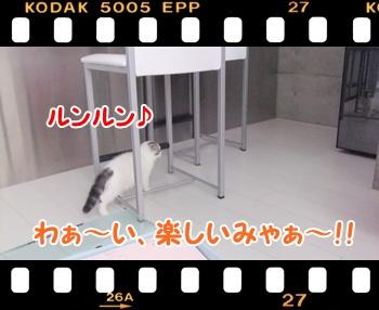 5_20110813132900.jpg