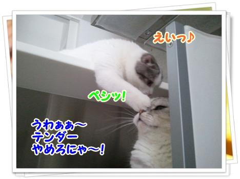 5_20111212012545.jpg