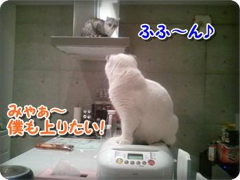 5_20111212224559.jpg