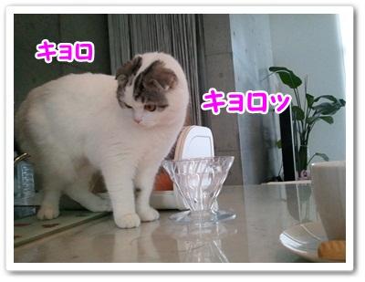 5_20120119013508.jpg
