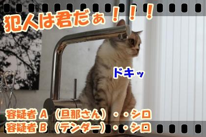 5_20120317031932.jpg