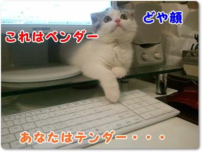 6_20110801021634.jpg