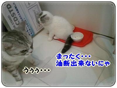 6_20110808210546.jpg