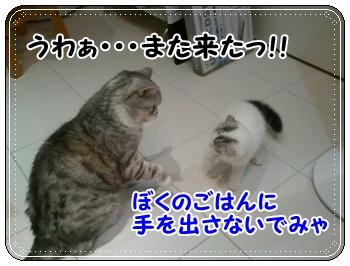 6_20110810011412.jpg