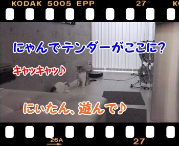 6_20110813132900.jpg