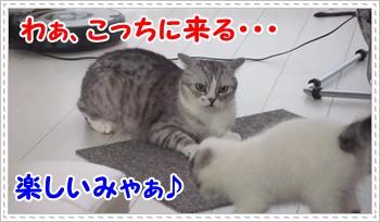 6_20110814004442.jpg