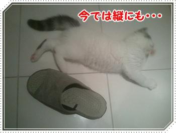 6_20110820122827.jpg