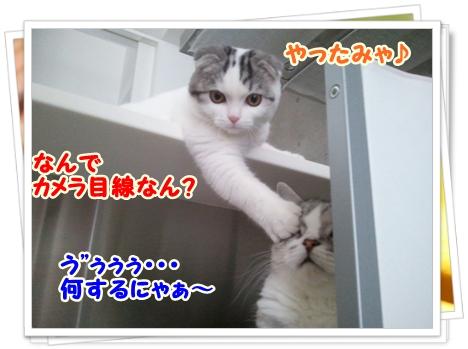 6_20111212012545.jpg