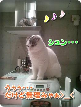 6_20111212224558.jpg