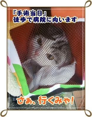 6_20111214015508.jpg