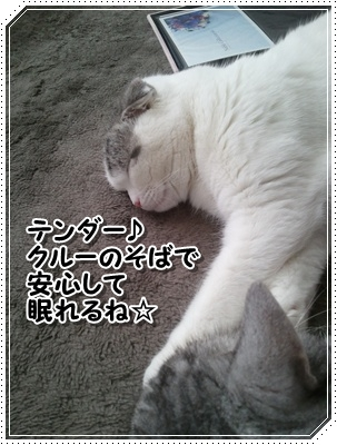 6_20120123002832.jpg