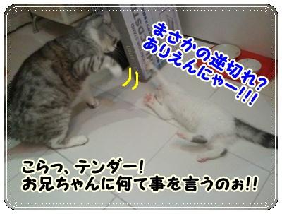 7_20110808210646.jpg