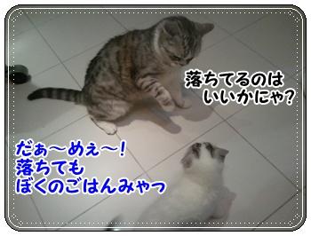 7_20110810011411.jpg