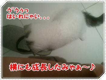 7_20110820232826.jpg