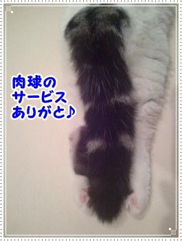 7_20111116211321.jpg