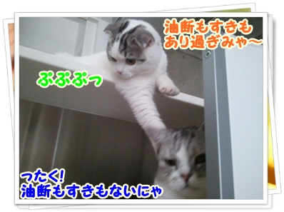 7_20111212012600.jpg