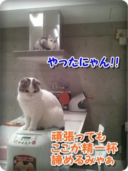 7_20111212224708.jpg