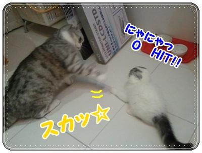 8_20110808210645.jpg