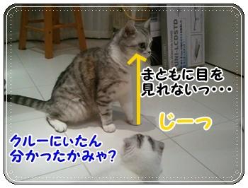 8_20110810011411.jpg