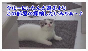 8_20110814004453.jpg