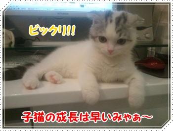 8_20110820122045.jpg