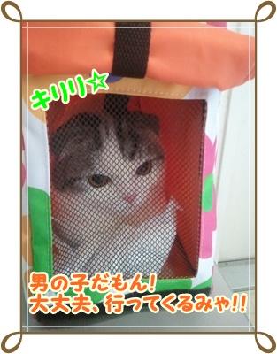 8_20111214015533.jpg