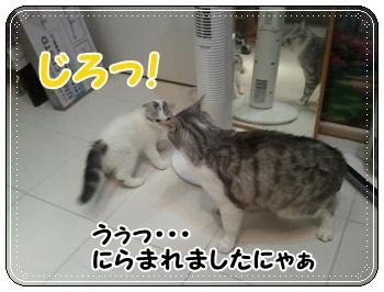 9_20110810011411.jpg